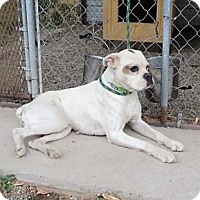 Adopt A Pet :: Dottie - Monte Vista, CO