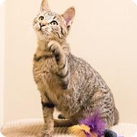 Adopt A Pet :: Radish - Chicago, IL