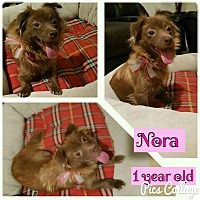 Adopt A Pet :: Nora - LAKEWOOD, CA