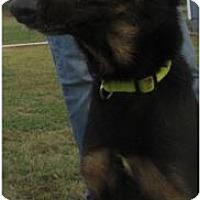 German Shepherd Dog Mix Dog for adoption in Von Ormy, Texas - Chloe