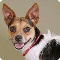 Adopt A Pet :: Sweet Pea - Sudbury, MA