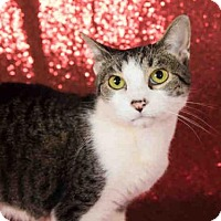 Adopt A Pet :: JOSIE - Orlando, FL