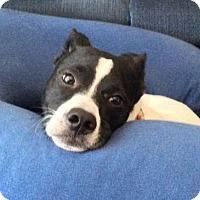 Adopt A Pet :: Spike - Kingwood, TX
