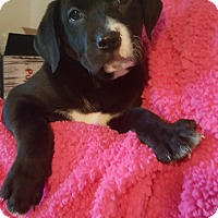 Adopt A Pet :: Jewel - Orland Park, IL