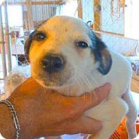 Adopt A Pet :: SADIE - Katy, TX