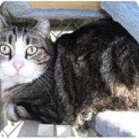 Adopt A Pet :: Martin - El Cajon, CA