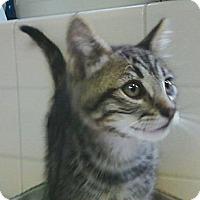 Adopt A Pet :: Zeke - Irvine, CA