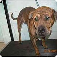 Adopt A Pet :: Clyde - Emory, TX