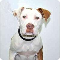 Adopt A Pet :: Skip - Port Washington, NY