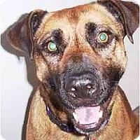Adopt A Pet :: Agave - Scottsdale, AZ