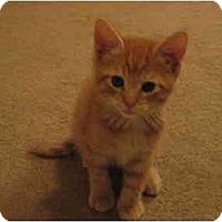 Adopt A Pet :: Carrots - Irvine, CA