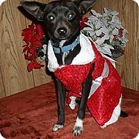 Adopt A Pet :: Lollie - Chandlersville, OH