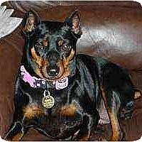 Adopt A Pet :: Mitzy - Florissant, MO