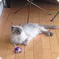 Adopt A Pet :: Karina - Edmonton, AB