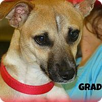 Adopt A Pet :: GRADY - Henderson, KY
