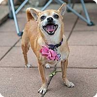 Adopt A Pet :: Buttercup - Minneapolis, MN
