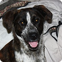 Adopt A Pet :: Rusty - Marion, AR