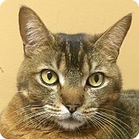 Adopt A Pet :: Cleo - Winchester, CA