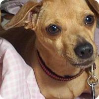 Adopt A Pet :: Eddie - San Francisco, CA