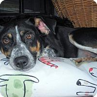 Adopt A Pet :: Kira - Knoxville, TN