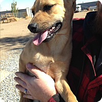 Adopt A Pet :: Amy - Perris, CA