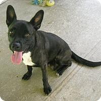 Adopt A Pet :: STELLA - Odessa, FL