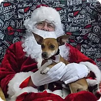 Adopt A Pet :: Chilly Willy - Lewisburg, TN