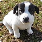 Adopt A Pet :: Babes Sparky