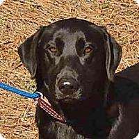 Adopt A Pet :: Magic - Yardley, PA