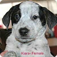 Adopt A Pet :: Disney Litter - Poughkeepsie, NY