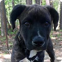 Adopt A Pet :: Olson - Spring Valley, NY