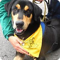 Adopt A Pet :: Rado - Rockville, MD