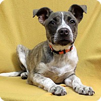 Adopt A Pet :: Tammie - Westminster, CO