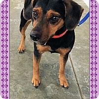 Adopt A Pet :: Libby - Genoa City, WI