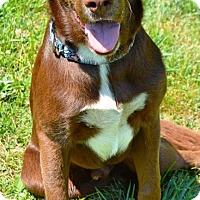 Adopt A Pet :: Paynter - Pleasant Plain, OH