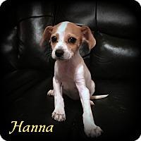 Adopt A Pet :: Hanna - Denver, NC
