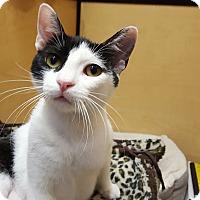 Adopt A Pet :: Jessica - El Cajon, CA