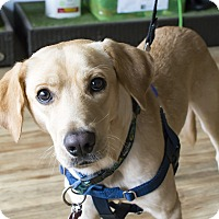 Adopt A Pet :: Dustin Henderson - Jersey City, NJ