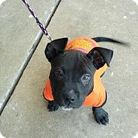 Adopt A Pet :: Mr Wiggelson - Wichita Falls, TX