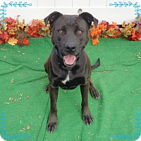 Labrador Retriever Mix Dog for adoption in Marietta, Georgia - JACKSON