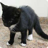 Adopt A Pet :: Tip Toe - Gary, IN
