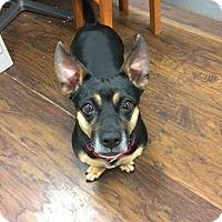 Adopt A Pet :: Xena - Colmar, PA