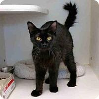 Adopt A Pet :: ABBY - Texas City, TX