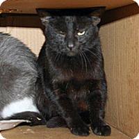 Adopt A Pet :: Carol - Wildomar, CA