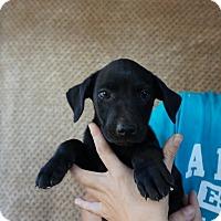 Adopt A Pet :: Kudu - Oviedo, FL