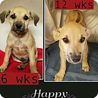 Adopt A Pet :: Zeke pending adoption - Manchester, CT
