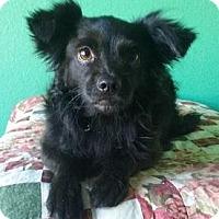 Adopt A Pet :: Hurley - Gilbert, AZ