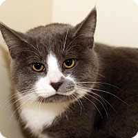 Adopt A Pet :: ARTEMIS - Royal Oak, MI