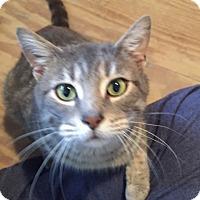 Adopt A Pet :: Gilly - Elyria, OH