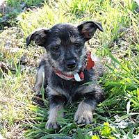 Adopt A Pet :: Zack - Berkeley Heights, NJ